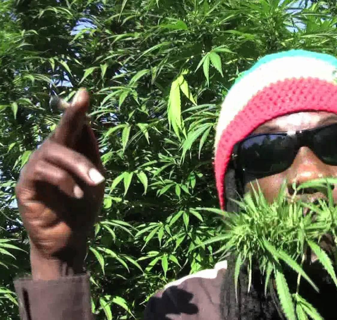 """Marlon Asher """"Ganja Farmer"""""""